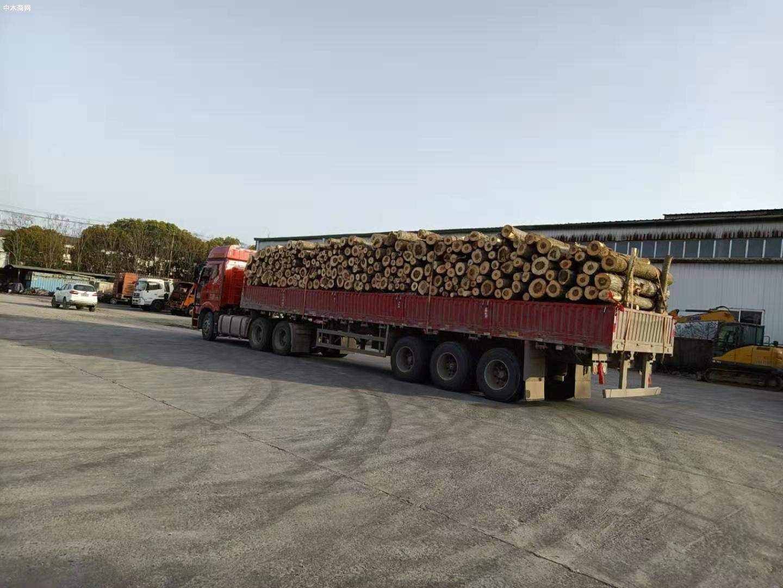 江苏灌南召开木材企业专项整治工作推进会