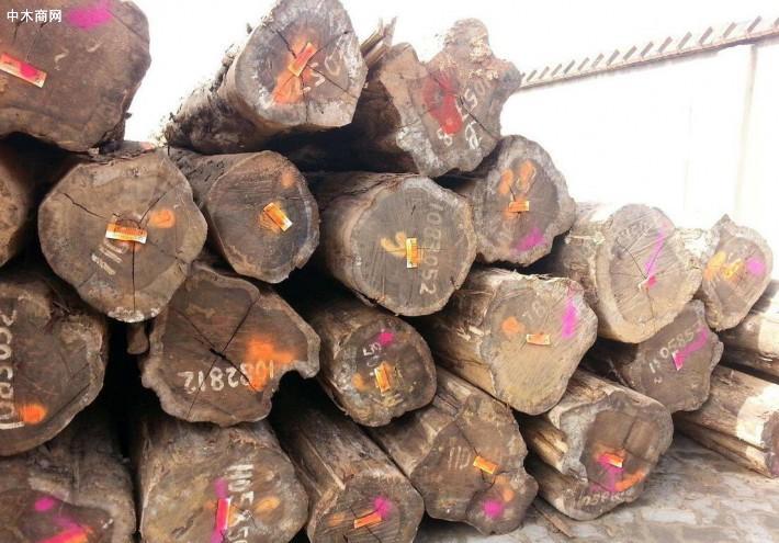 南美铁木豆原木价格行情