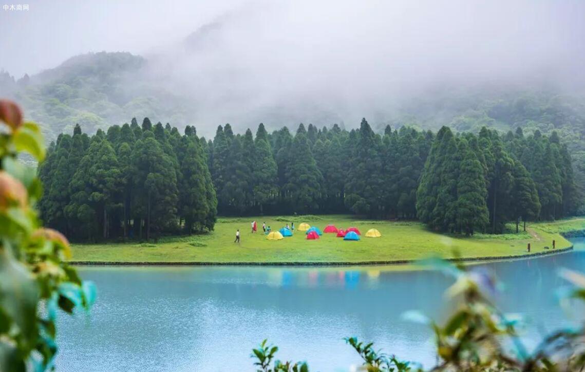 1-2月广西林业集团营收16.53亿元