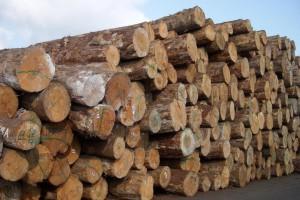 新西兰松木原木出口价上涨5美元左右