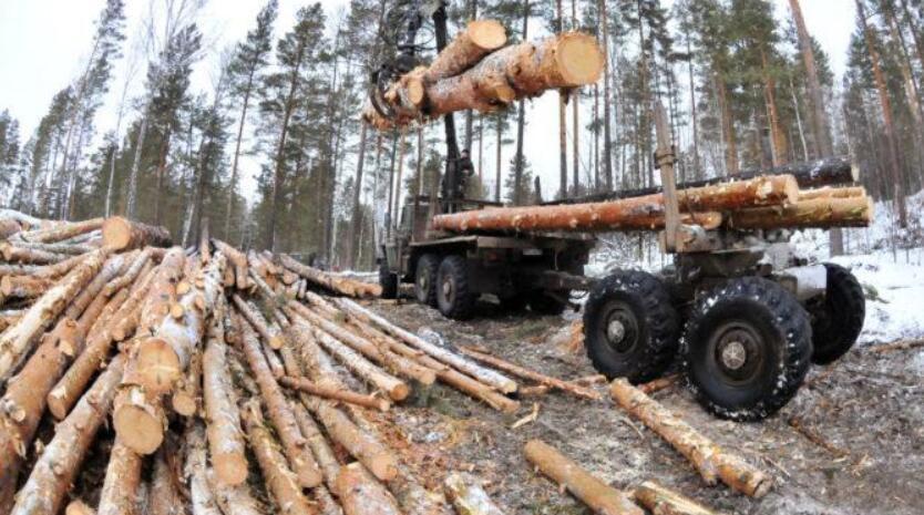 俄正研究关于林业综合体领域平衡监管新法案