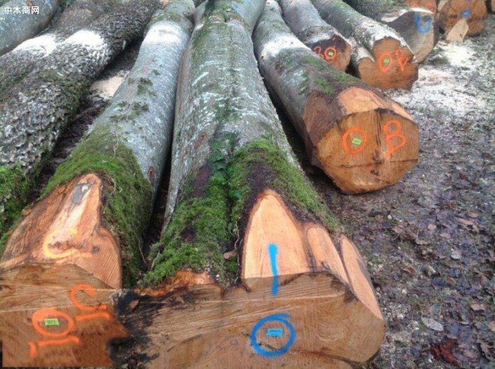今日最新红榉木原木价格行情走势