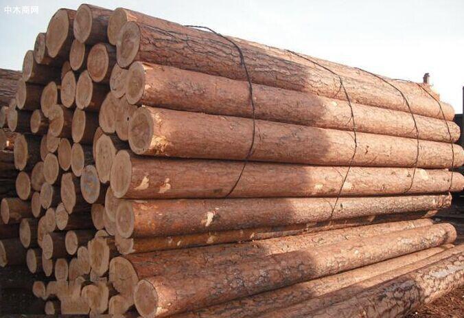 俄罗斯樟子松原木价格行情