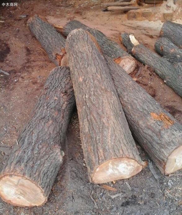 梓树原木价格多少钱一立方