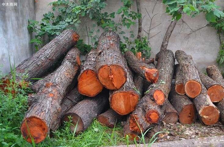 椿树原木价格多少钱一立方