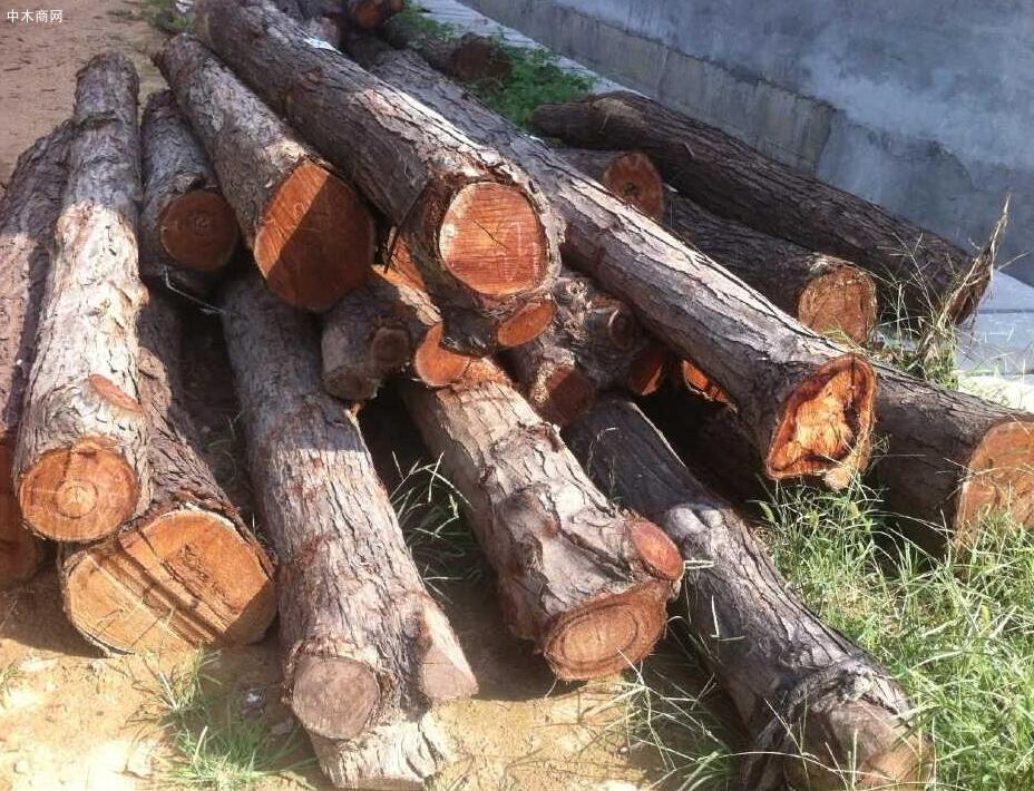 椿树原木价格多少钱一立方厂家