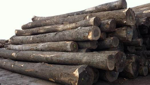 水曲柳是什么木头生长在哪及水曲柳木家具优缺点有哪些价格