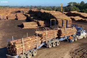 由于中国进口冻结,澳大利亚木材面临长期僵局