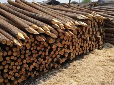杉木桩单价多少钱一根?