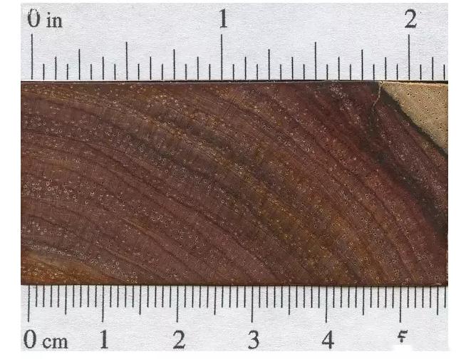 微凹黄檀木材的构造特征厂家