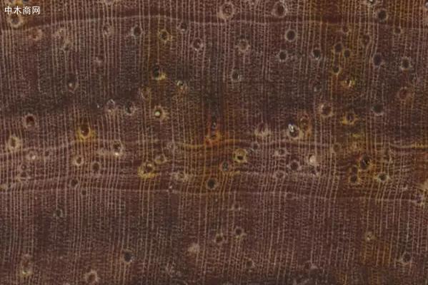 微凹黄檀木材的构造特征批发