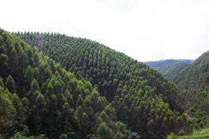 2021年开年广西林业集团营收破16亿元