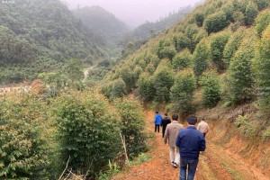 广西罗城木材深加工企业产值达7.01亿元