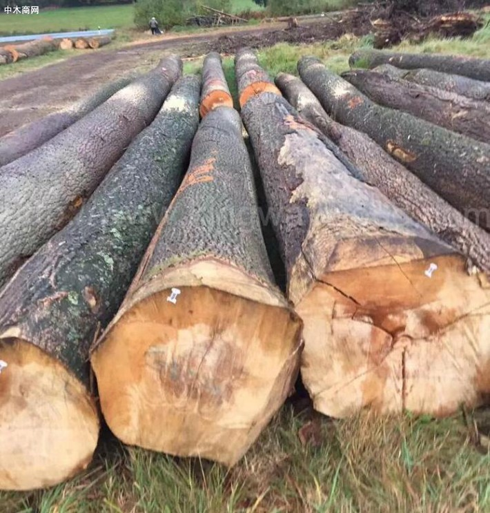 欧洲白蜡木原木价格行情
