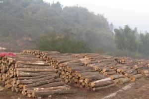 雅长林场一季度木材销售突破30万立方米