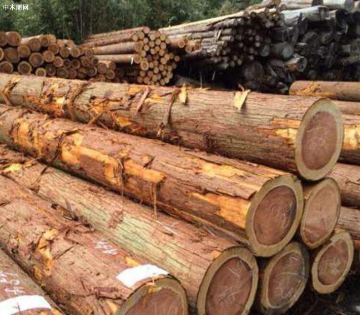 柳杉木材的优点及特点价格