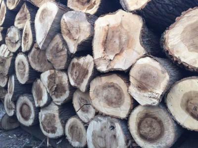 白杨木原木现在多少钱一吨?
