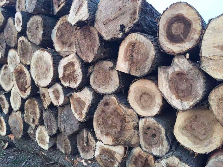 白杨木原木现在多少钱一吨价格