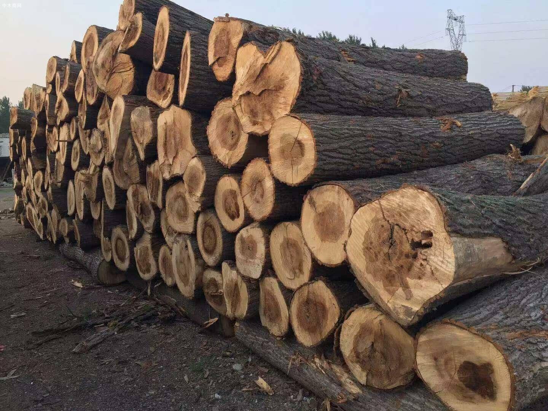 白杨木原木现在多少钱一吨厂家