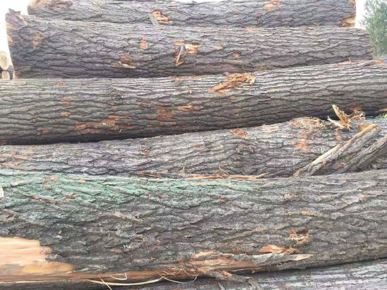 白杨木原木现在多少钱一吨品牌