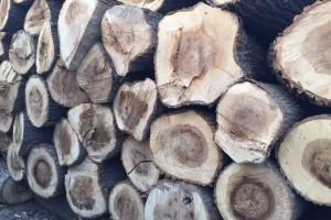 白杨木原木优点