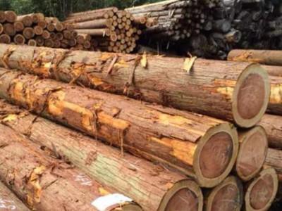 柳杉原木原产地批发