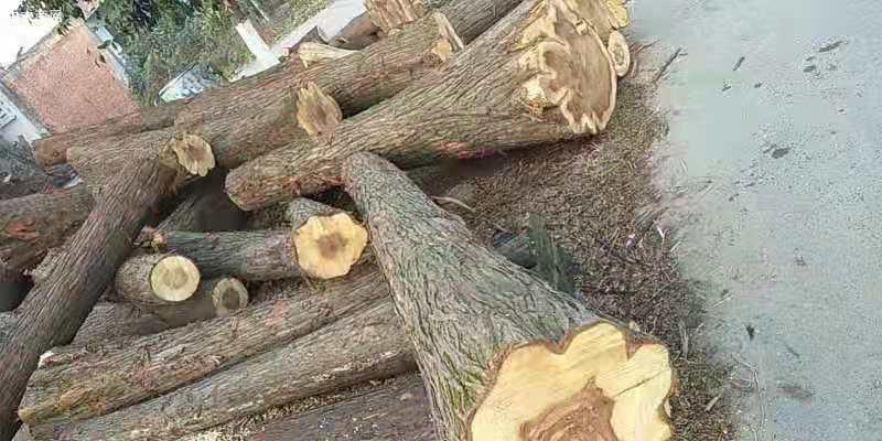 求购:本地落叶松原木