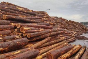 湖南省浏阳市林业考察团到安福县考察学习林业产业建设