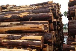 甘肃玉门市对木材经营加工场所进行安全生产检查
