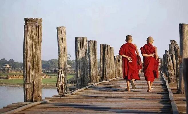 缅甸柚木是什么木材?为什么被誉为万木之王供应