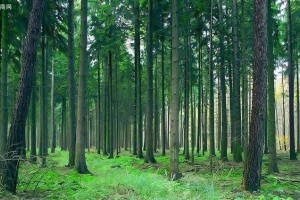 国家林草局解读大陆林业发展为台胞台企提供的机遇