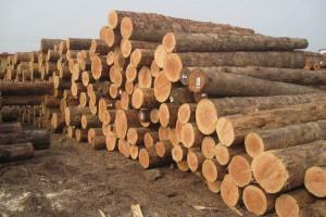 俄罗斯冬季木材采伐结束,市场面临木材匮乏窘境