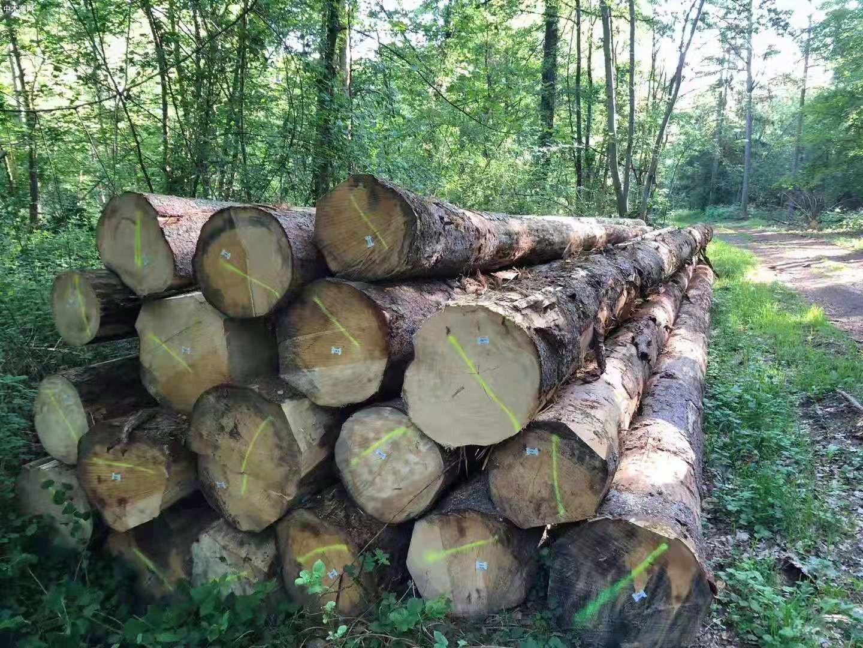 德国云杉原木原产地直销