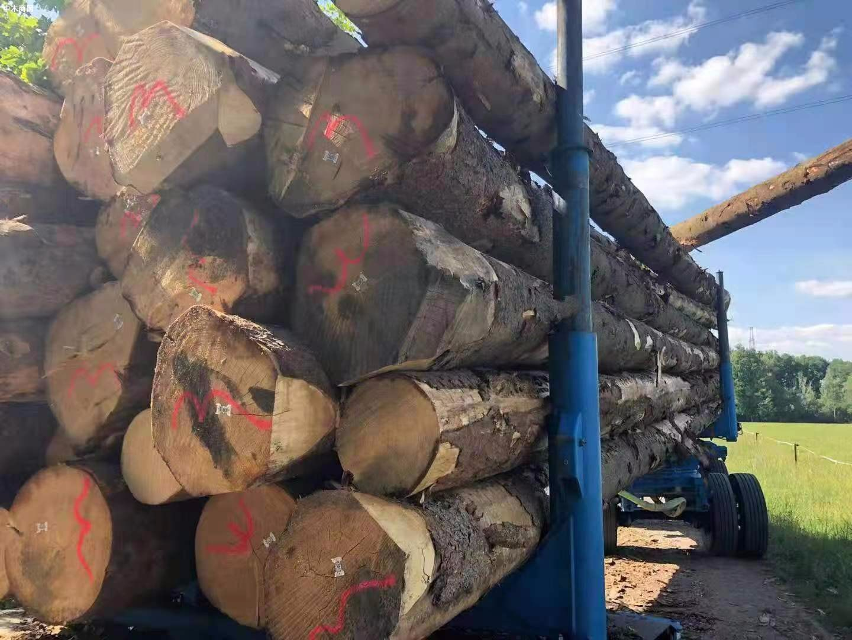 德国云杉原木原产地直销图片