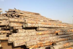 维都超额完成一季度木材销售任务