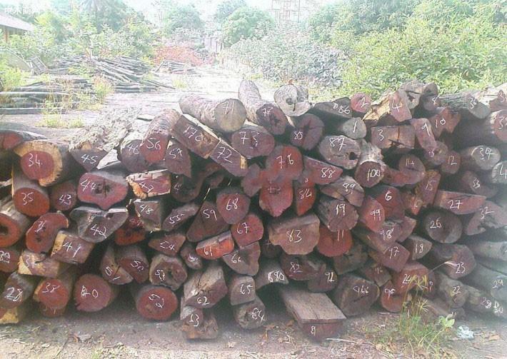 印度安得拉邦紫檀木拍卖第十四阶段第二轮结束