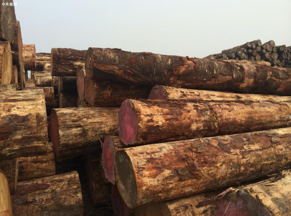 新西兰松木原木价格行情