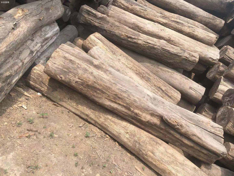 缅甸柚木原材多少钱一方图片