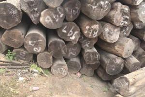 缅甸柚木原材价格图片