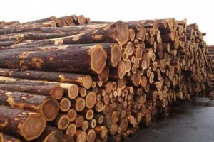 SPF疯狂的行情让国内木材贸易商进退两难