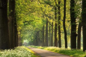 法国将投入2亿美元用于支持相关森林产业发展