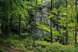 德国政府投资15亿欧元改善森林状况