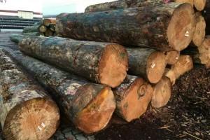 来自欧洲的原木数量保持在每月100万方左右