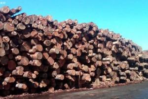 北美建筑师充分利用天然软木