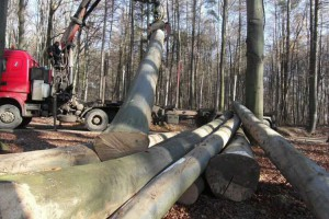 英国脱欧后木材贸易面临重重困难