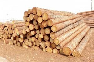 进口针叶材源头无序暴涨给市场带来了巨大压力