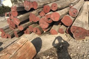 香港海关检获过去五年最大一批怀疑受管制木材
