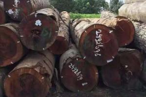 预计到2022年中国会出现866万方的原木进口缺口