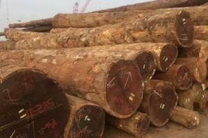 国内菠萝格原木价格有下跌趋势