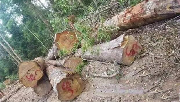 越南进口木头